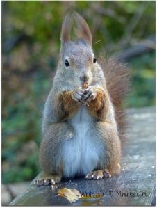 squirrel-567858_1920 (2)